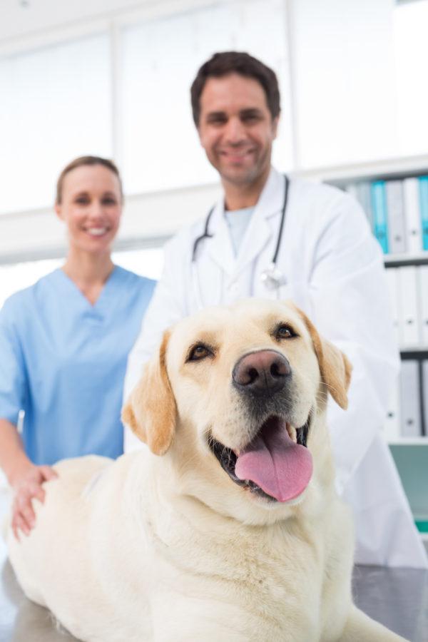 Veterinarians Animal Control